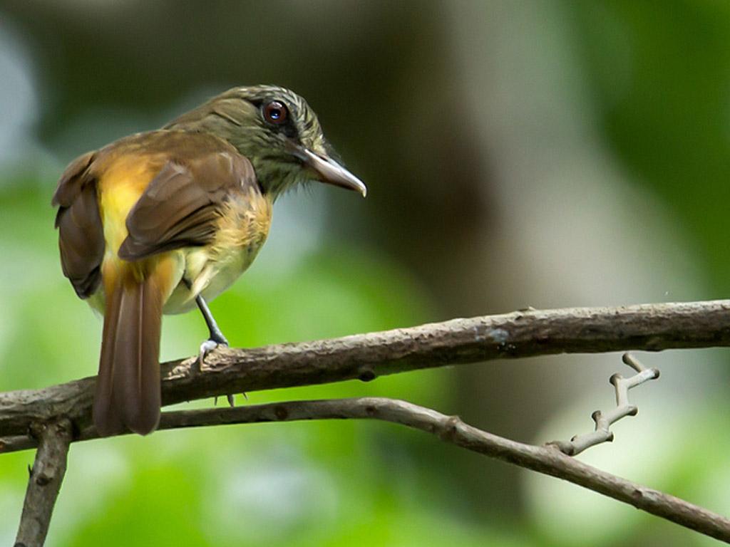 Metropolitan-Park-Panama