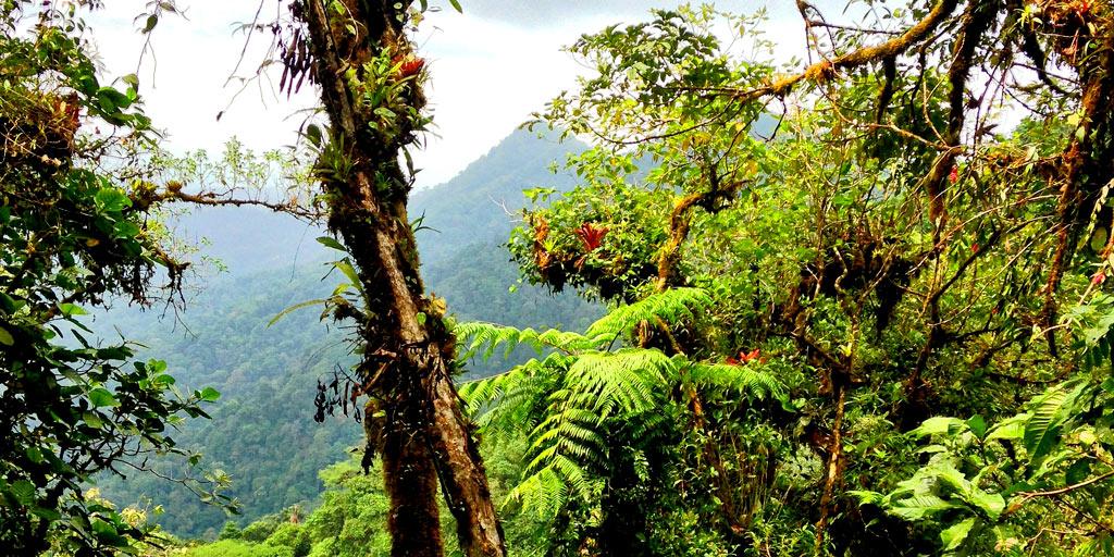 Darien Panama Trees